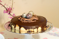 Boston Cream cake, decorated with chocolate eggs on a nest of chocolate curls for easter